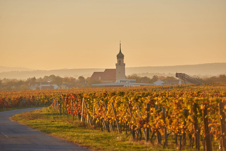 Horitschon Wein ©Landauer